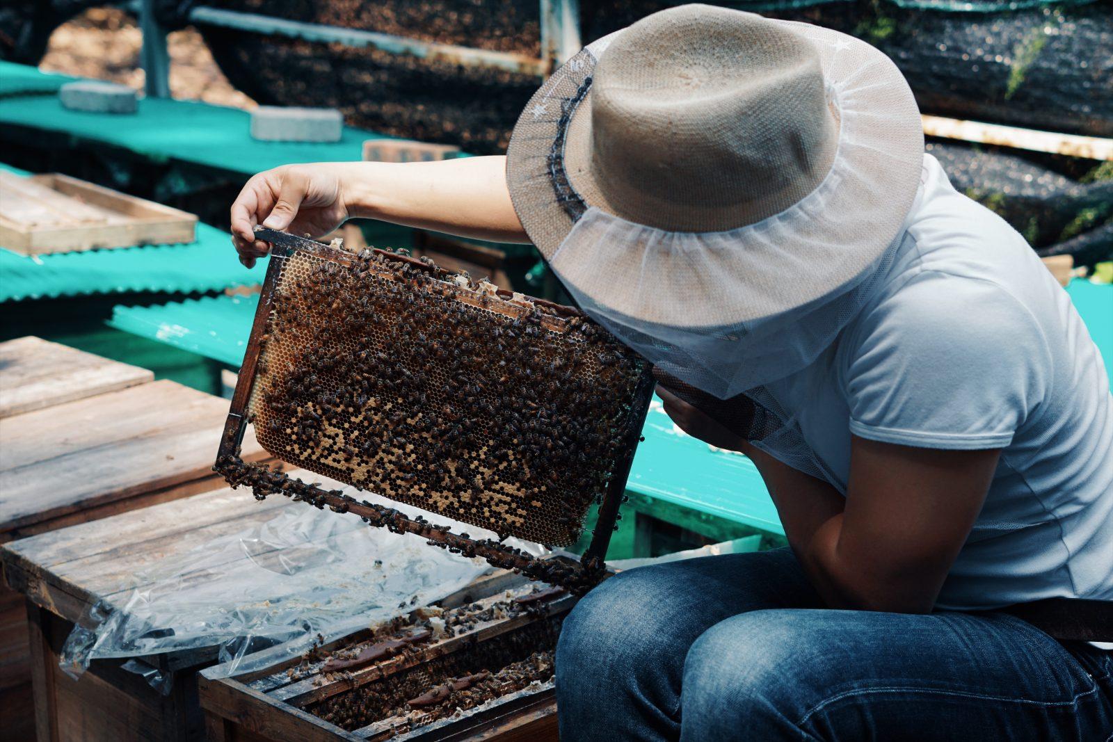香港蜂蜜品牌