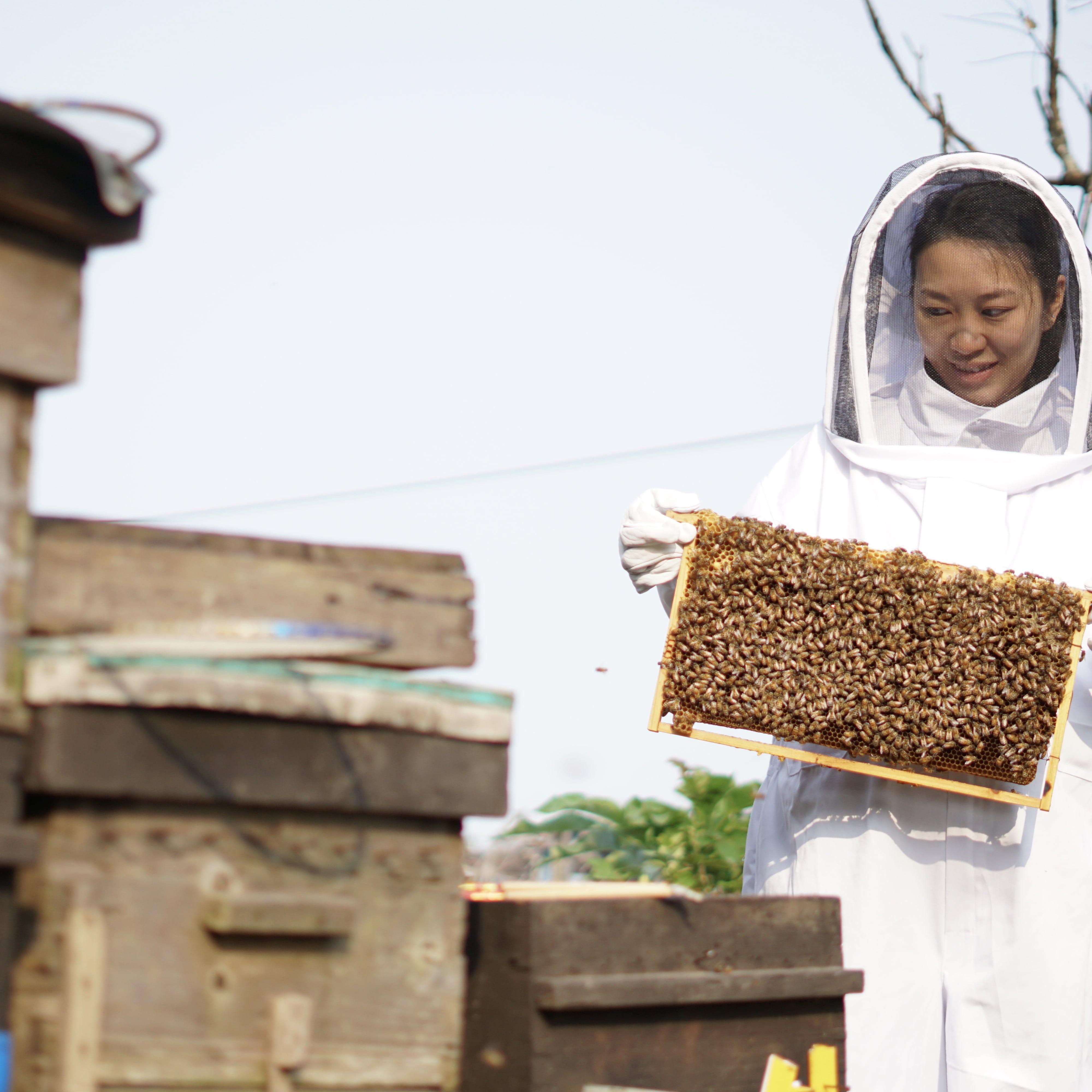 參觀蜂場, visit beehive