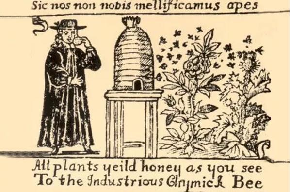 蜂蜜酒起源