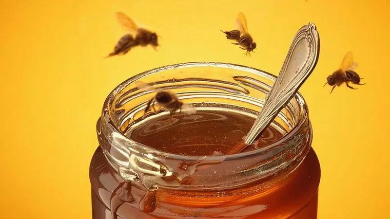 蜂蜜減肥法